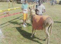 donkeyrace 263x190 - #donkeyrace...