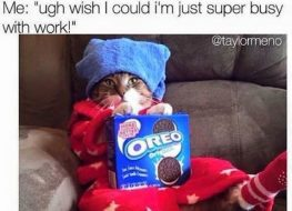 tag your super busy friend tagfriend oreo catmeme 263x190 - Tag your super busy friend. #tagfriend #oreo #catmeme...