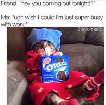 tag your super busy friend tagfriend oreo catmeme 360x359 - Tag your super busy friend. #tagfriend #oreo #catmeme...