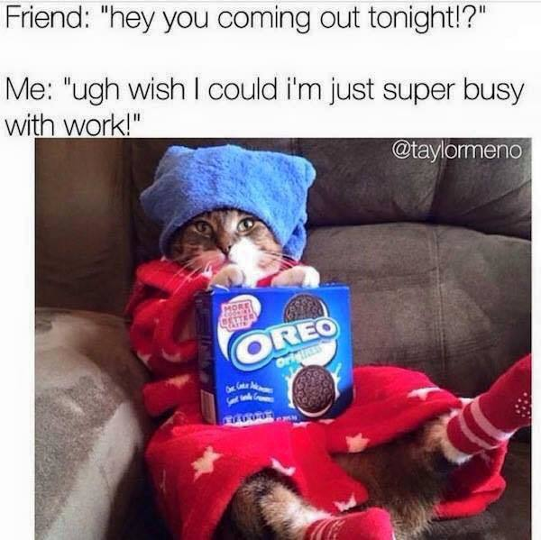 Tag your super busy friend. #tagfriend #oreo #catmeme