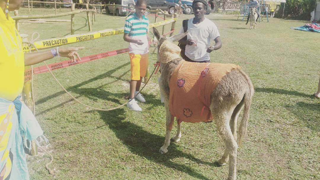 #donkeyrace